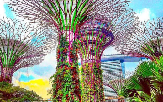 Singapore: Gardens By The Bay Supertrees